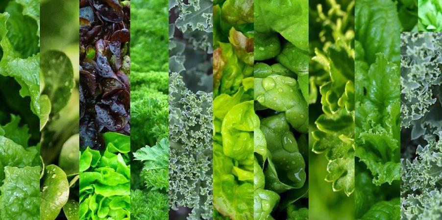 mixed leafy greens