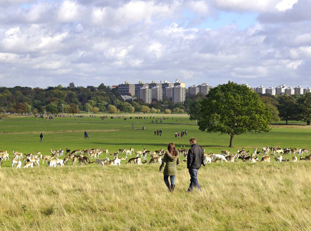 5-reasons-Britains-favourite-nature-presenter-uses-walking-as-therapy-richmond-park