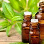 Lemon Verbena Oil: The Oldie but Goodie Culinary Herb