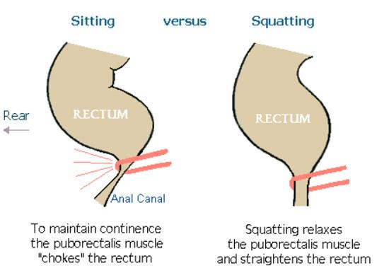sitting versus squatting