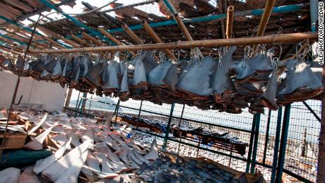 Over 18 thousand shark fins were estimated to be drying on a Hong Kong rooftop.