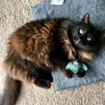Medical News Today: Catnip: What do we know about the feline drug?