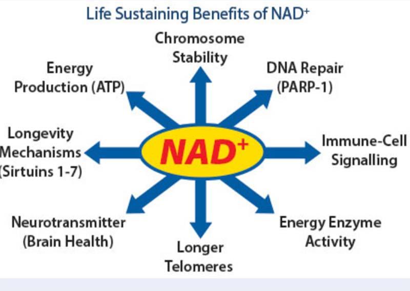 life sustaining benefits of nad
